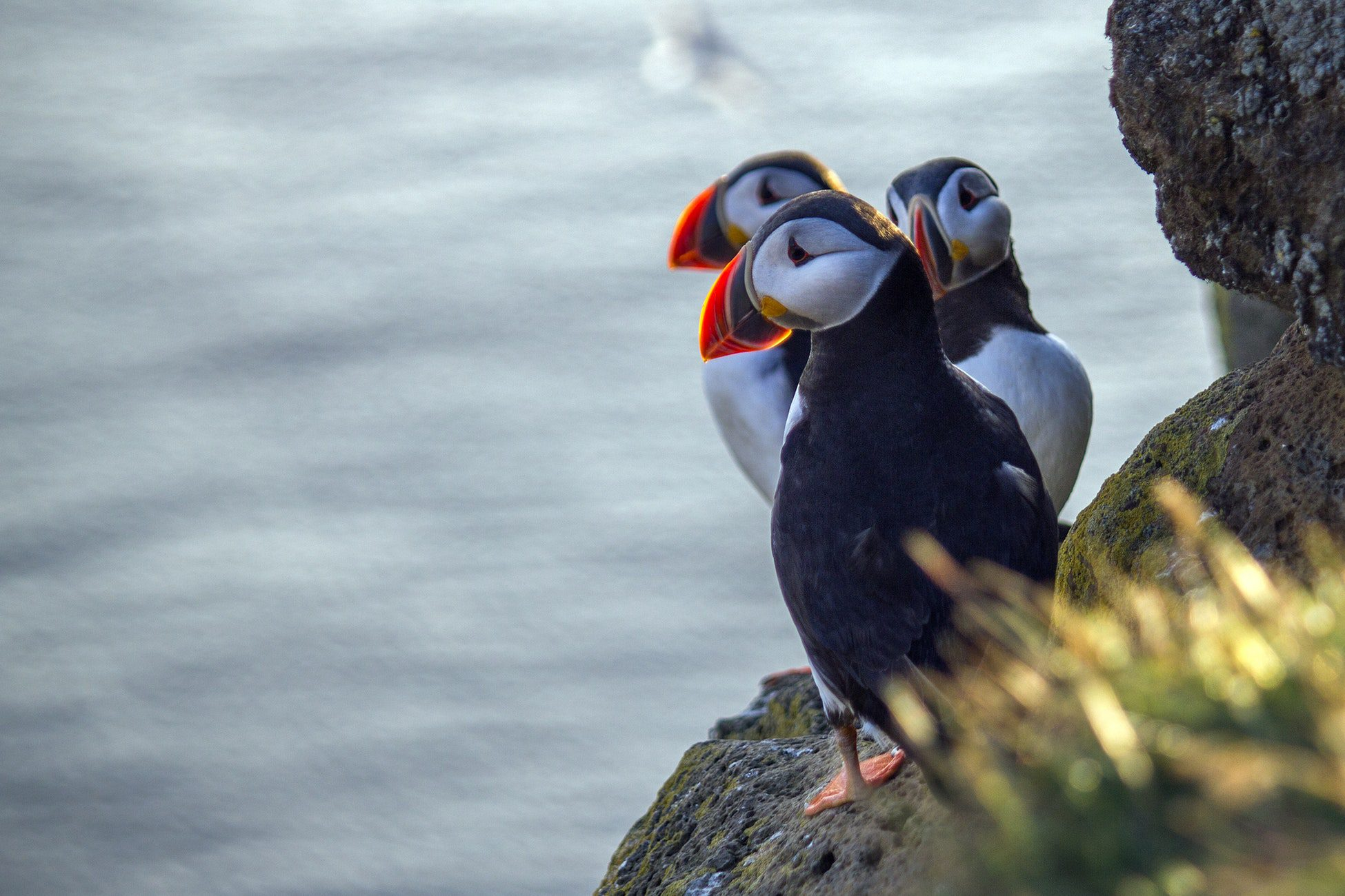 Puffin tour Private tour