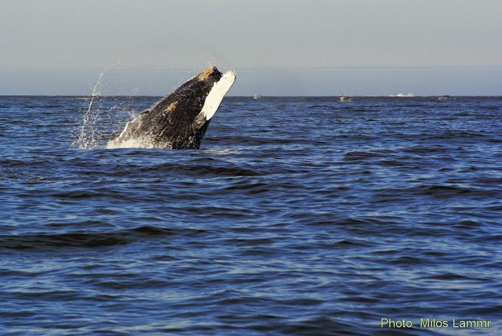 Private Whale Watching Luxury Yacht Cruise